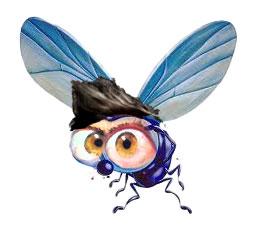 mosca-ciuffo