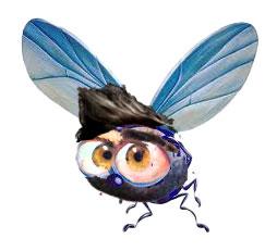 mosca-sopracciglio